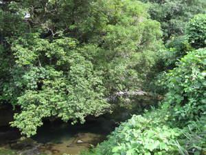 松尾川(2)