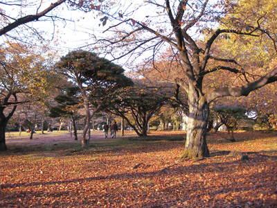 新宿御苑2010年11月(2).JPG