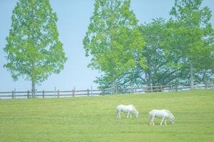 牧場.jpg
